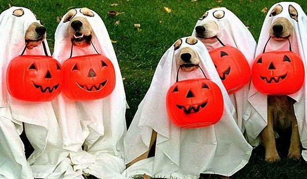 disfraz para perro fantasma